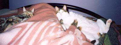 Tres al llit